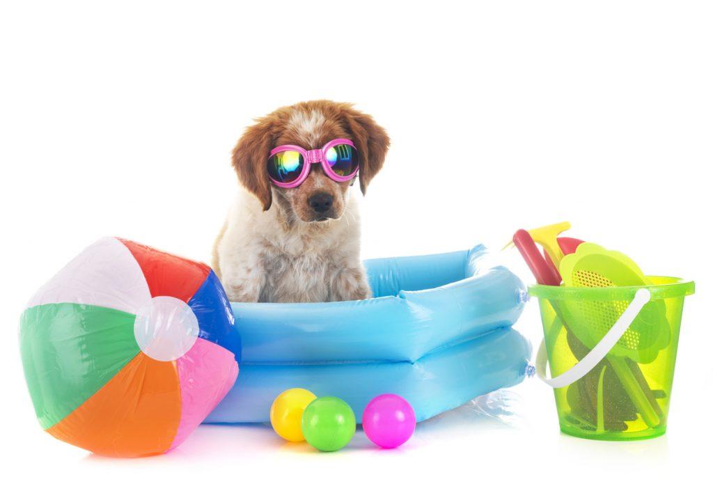 best pool toys 2021